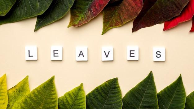 흰색 큐브에 나뭇잎 단어로 잎의 평면 위치 구성