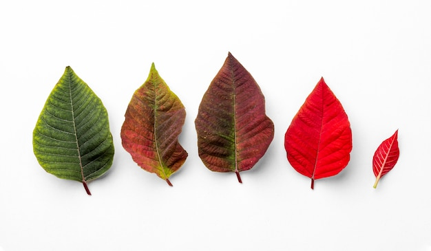 잎의 평평한 위치 구성