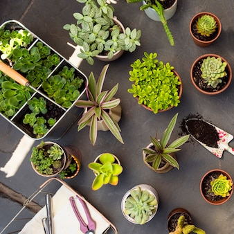Flat lay composition of plants in pots