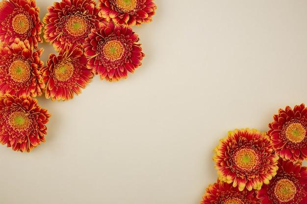 Плоская композиция с красивыми цветами герберы и ромашками на светло-бежевом фоне.