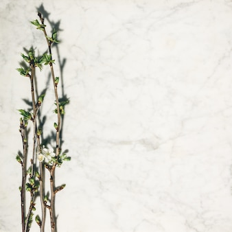 Flat lay composition with beautiful spring cherry branches on white marble background