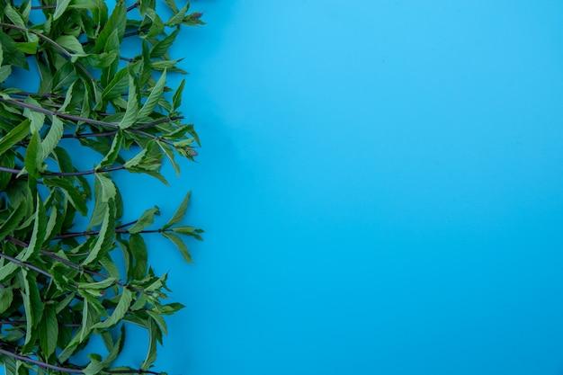Плоская композиция с листьями свежей мяты на синем фоне