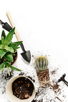 Flat lay composition with houseplants and garden tools