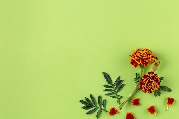 Плоская композиция с оранжевыми и желтыми цветами календулы