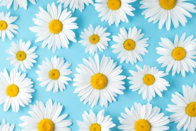 休日のお祝いのための青い背景のデイジーの花にかわいいカモミールとフラットレイ構成