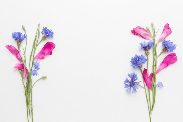 Flat lay cornflowers and pink petals