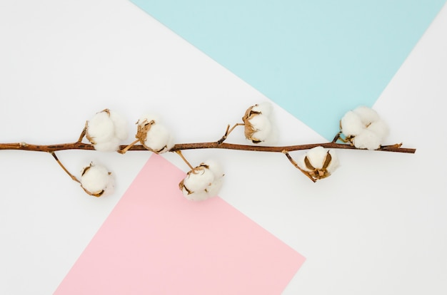 Flat lay cotton flowers on colourful background