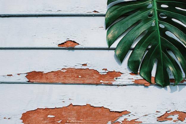 열대 자연의 평평한 평신도 프레임은 소박한 나무 그루지 배경에 몬스테라를 남깁니다.