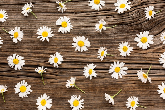 Flat lay daisies arrangement on wood