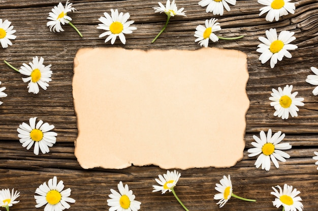 Flat lay daisies with blank burnt paper