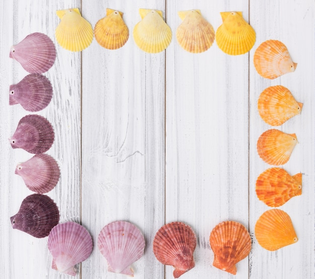 Flat lay design colorful scallop on vintage white wooden background,top view