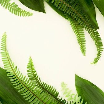 Lay piatto di diverse foglie e felci con copia spazio