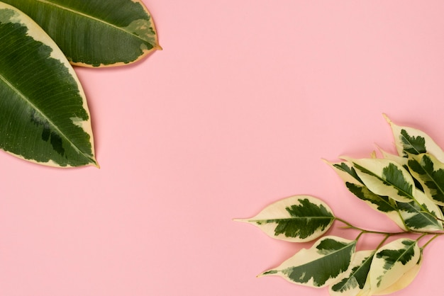 Flat lay of different plant leaves with copy space