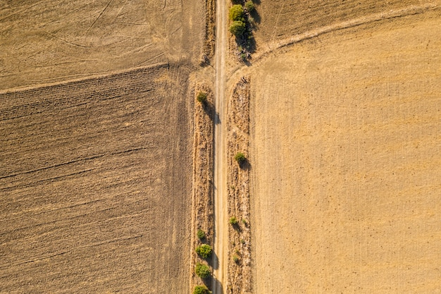 Flat lay dried autumn crops taken by drone