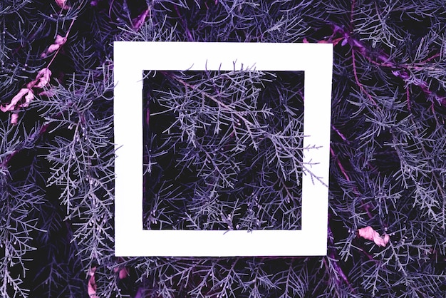 Flat lay of fantastic magic blue magenta pink color pine wood branches background with white frame on top with copy space f