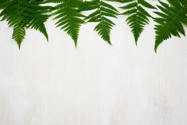 Lay piatto di foglie di felce con copia spazio