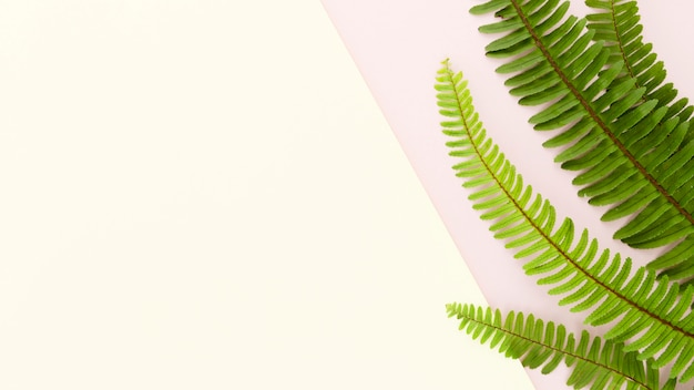 Flat lay of ferns with copy space