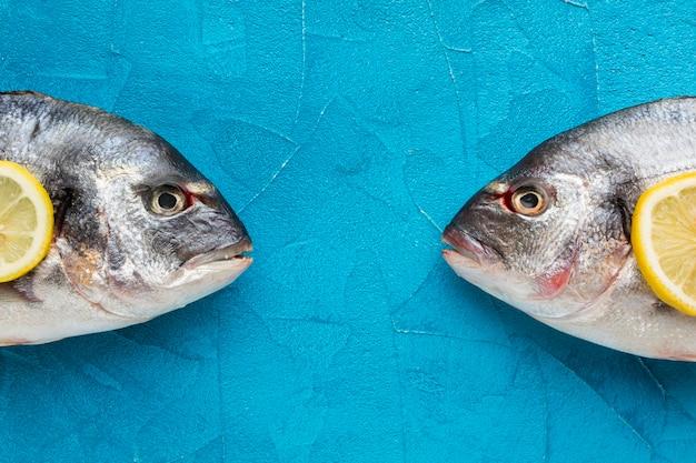 Плоская кладка рыбы на синем фоне