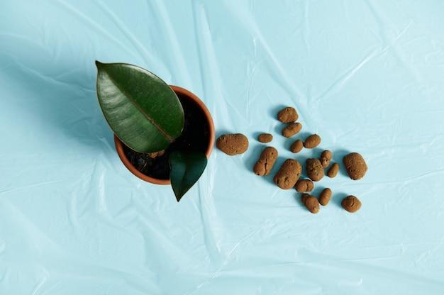 フラットレイフラットレイ組成物、散在する膨張した粘土、小さな観葉植物のある土鍋の隣の透明なフィルム上の植物の排水