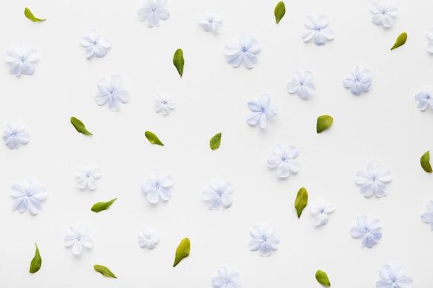 Flat lay of floral concept arrangement