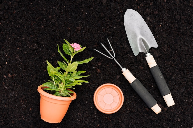 Flat lay flower pot on soil background
