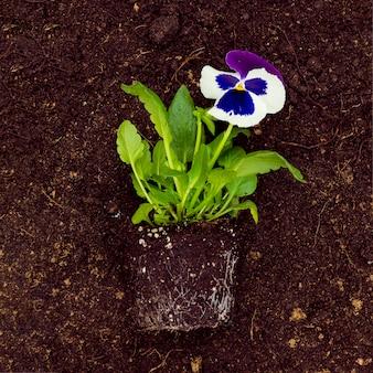 Flat lay flower on soil