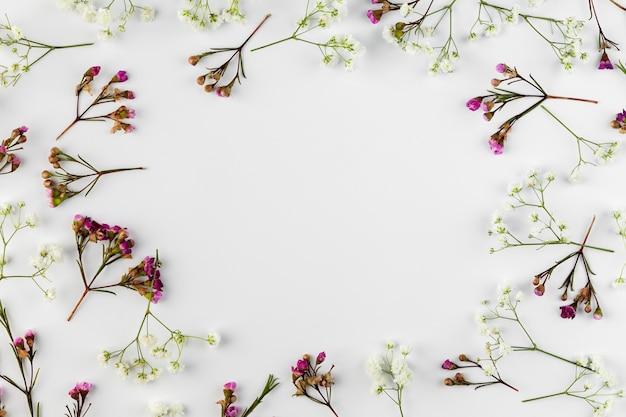 Плоская коллекция цветов на столе