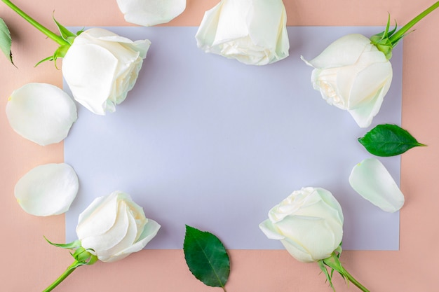 Flat lay flowers composition for your lettering. frame made of white rose flowers on blue background. invitation greeting card.