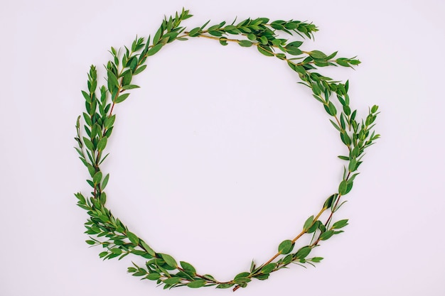 Плоская лежащая рамка листьев эвкалипта на белом фоне