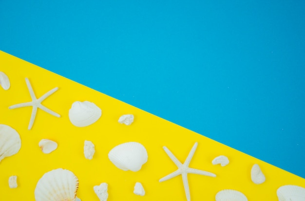 Flat lay frame of shells and starfishes on a yellow and blue background with copy space