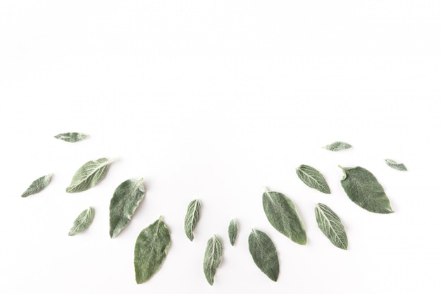 Flat lay of frame with green branches, leaves and petals over white background