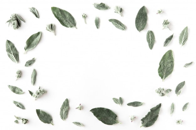 Flat lay of frame with green branches, leaves and petals on white background