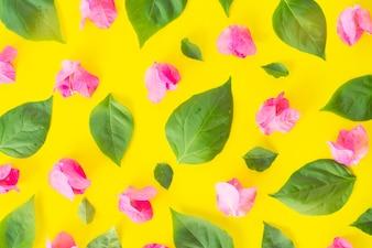 Flat lay Fresh bougainvillea flower