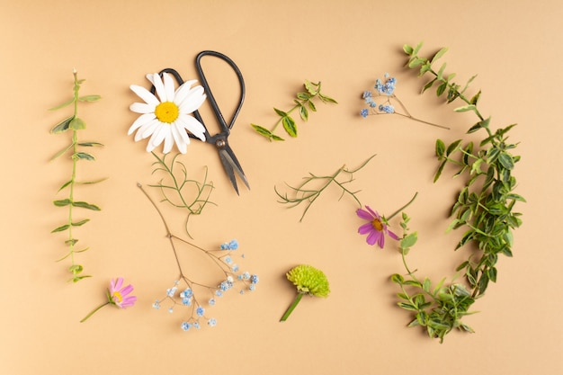 Flat lay of fresh cut flowers of garden for herbarium on beige background
