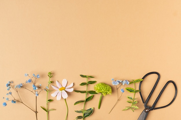 Flat lay of fresh cut flowers of garden for herbarium with scissors on beige