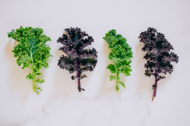 Flat lay fresh green and purple kale on marble, copy space