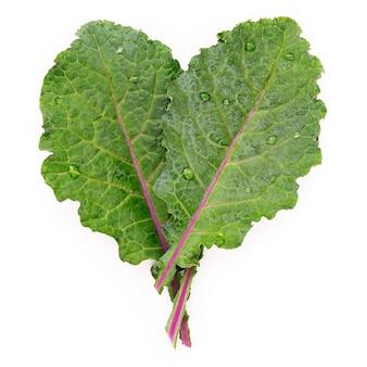흰색 배경에 격리된 심장 모양의 평평한 평신도 신선한 케일 잎. 상위 뷰는 건강한 유기농 식품을 좋아합니다.