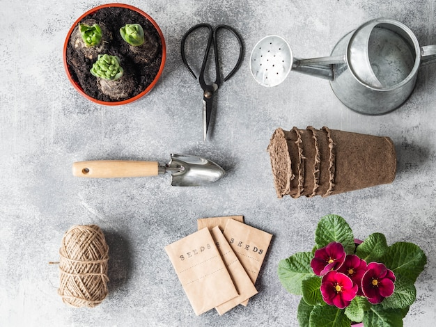 Flat lay garden composition with spring flowers - hyacinths, primrose, seeds in pack and garden tools
