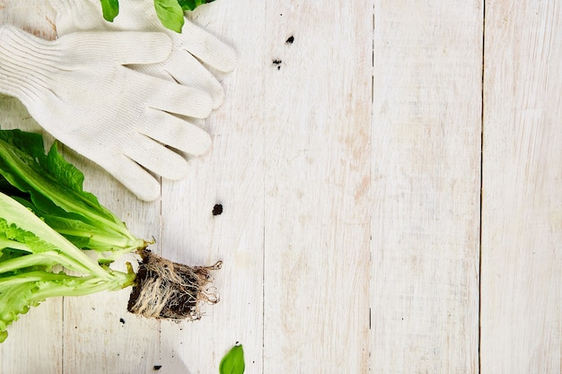 Flat lay of gardening tools, basil, eco flowerpot, soil on white wooden table.
