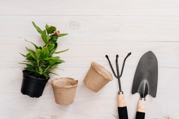Flat lay gardening tools and a plant
