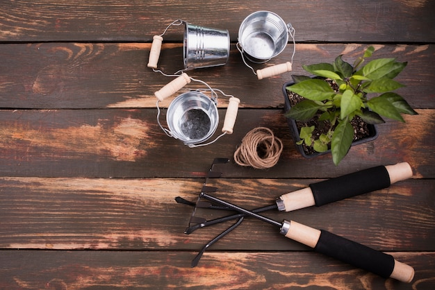 Flat lay of gardening tools and plant