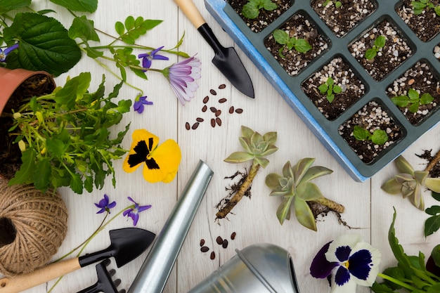 Flat lay gardening tools and plants on wooden background