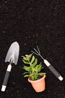 Flat lay gardening tools with flower pot