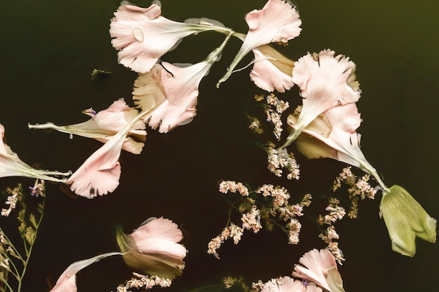 Flat lay gorgeous pink flowers in black water