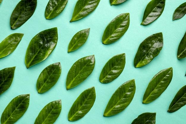 Assortimento di foglie verdi piatte