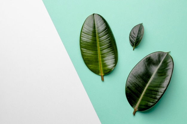 Flat lay green leaves composition with copy space