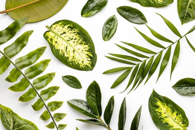 フラットレイ緑の葉の構成