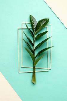 Flat lay green plant composition