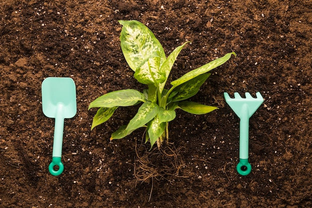 Flat lay of green plant and garden equipment