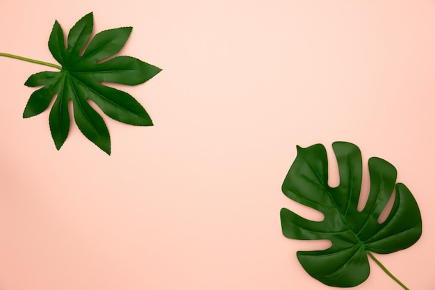 Flat lay of green tropical leaves on old rose background with copy space.